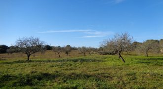 Beautiful rustic land with nice views. Buildable with 700m2