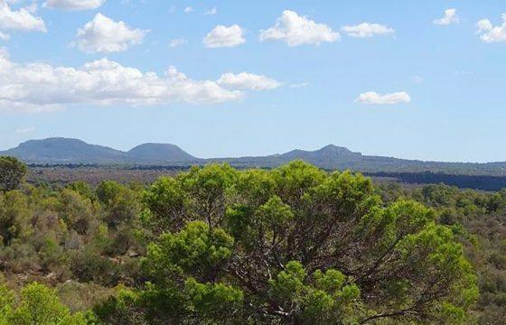 Grundstück in der Nähe von Palma, nur 15 Minuten vom Stadtzentrum entfernt, mit spektakulärem Panoramablick auf die Bucht von Palma