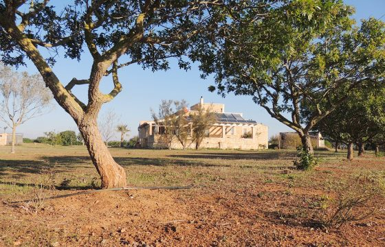 Finca in Ses Covetes auf einem Grundstück von 22.500 m2 und Wohnraum von 180 m2.