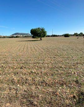 Rustikales Land von 21.000 m2 neben LLuchmajor.