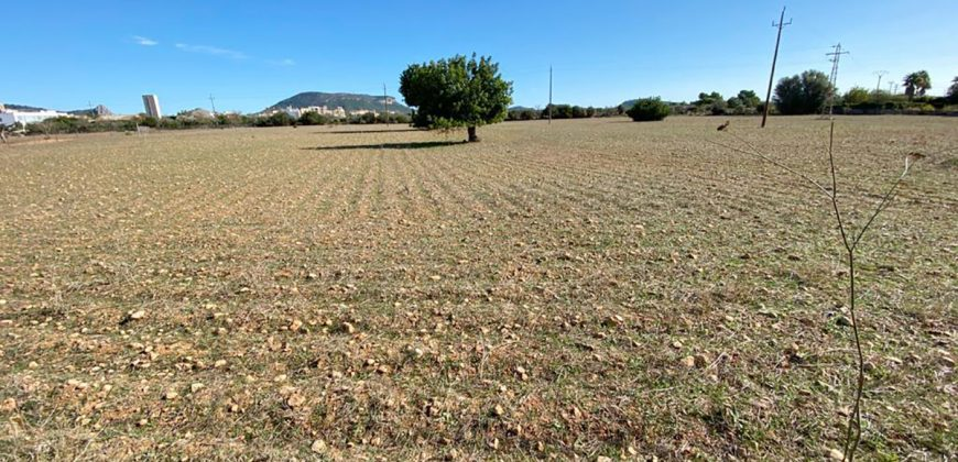 Rustic land of 21,000 m2 next to LLuchmajor.