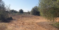 RUSTIC LAND OF 14,000 M2 500 M FROM THE TOWN.